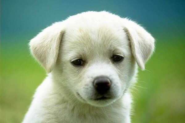 Pictures Of Puppies http://www.nationalpuppyday2017.com/2017/03/pictures-of-puppies-2017.html