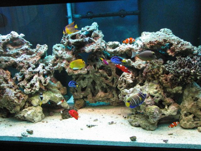 salt water aquarium   Setting Up a Saltwater Aquarium   Fish Tanks