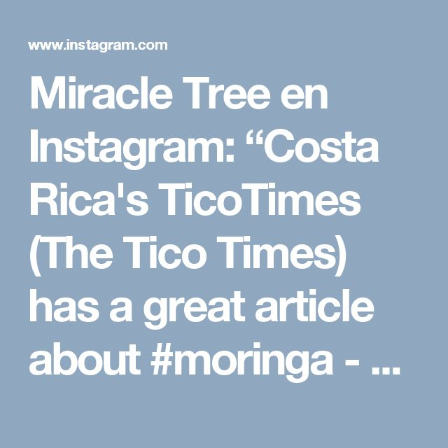 """Miracle Tree en Instagram: """"Costa Rica's TicoTimes (The Tico Times) has a great article about #moringa - """"a tree serious nutritional power"""" - and has dubbed this…"""""""
