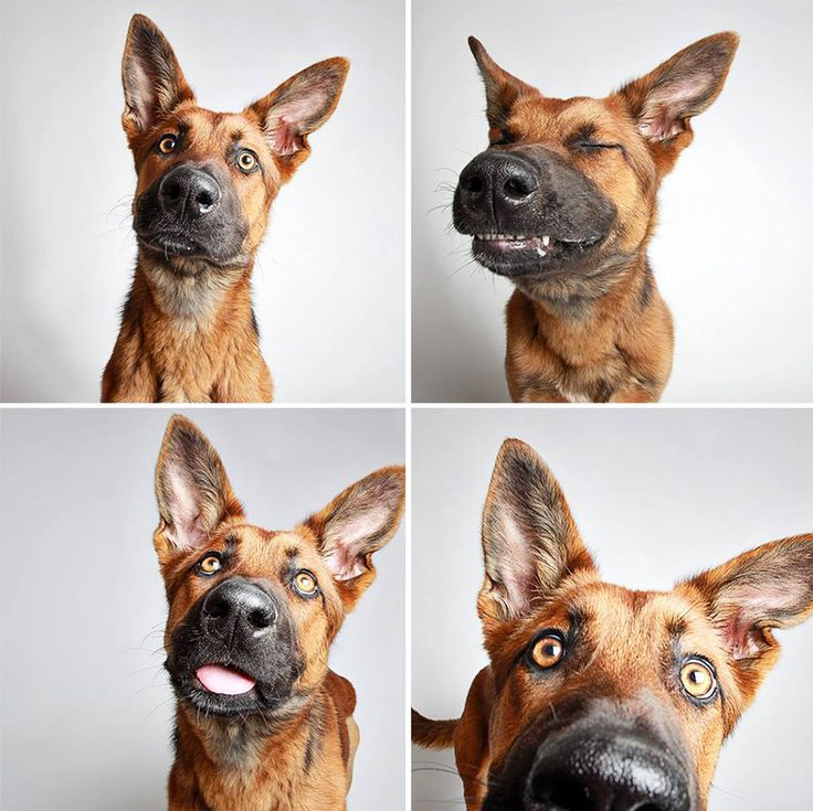 The Humane Society of Utah, an animal rescue and adoption organization in the U.S., is back with more wonderful shelter dog photobooth pics. Their ongoing project was started with the intent of casting these dogs in a more positive light to help them find forever homes.