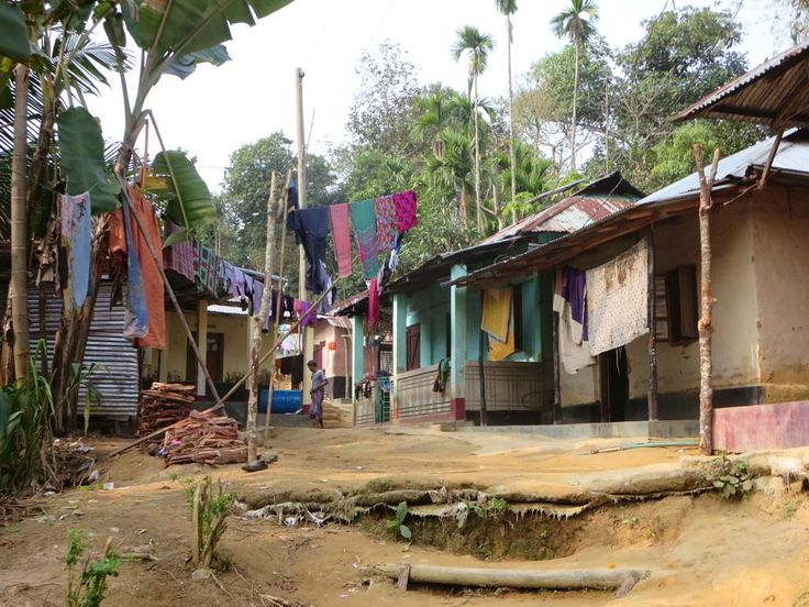Indigenous Khasi people live in hilltop villages around Lawachara National Park near Srimongal, Bangladesh. Their main source of income is from betel-nut trees.