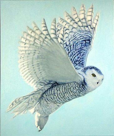 Le harfang des neiges, ou chouette des neiges, vit dans le nord de l'Asie et de l'Europe et en Amérique du Nord.