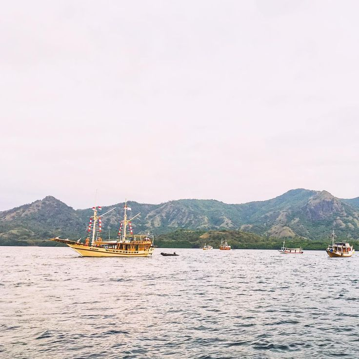 Sitting in a boat in the middle of Komodo National Park with the hopes to spot the largest bats in the world, the Flying Foxes. 🌟⛵️ As the sun set, thousands of bats emerged from beyond the horizon and flew overhead in search of food. It was mesmerizing. This was also the first time I saw bats in the wild! ☺️🌙