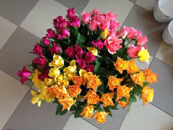Róże różnokolorowe