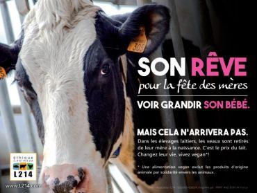 """À l'occasion de la fête des mères, la célèbre styliste Lolita Lempicka a lancé une campagne avec l'association L214 Ethique et Animaux pour défendre les vaches laitières, des mères exploitées pour leur lait, et appelle à adopter une alimentation vegan. """" Pour un verre de lait, nous privons des mères et leurs petits d'un lien affectif unique et essentiel. Les vaches ne sont pas des machines à produire du lait : elles sont des mères. En tant que mère, j'ai décidé de me montrer solidaire."""""""