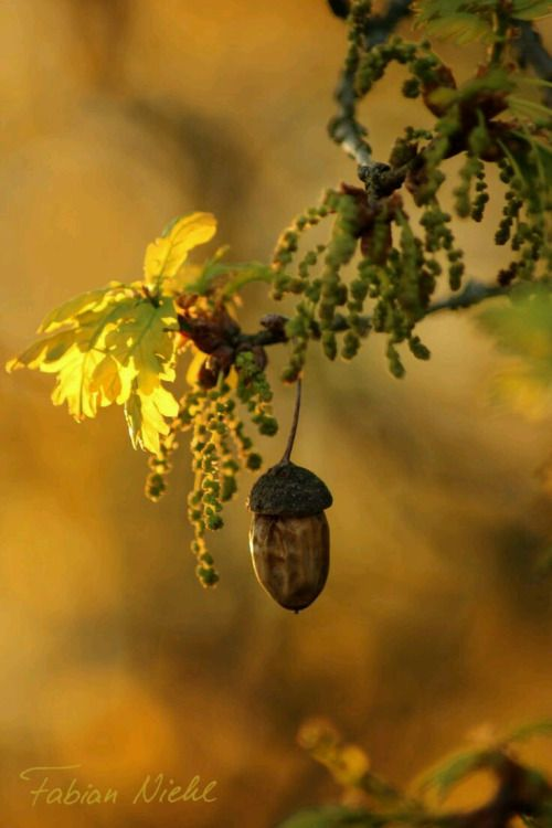 """""""When the oak is felled the whole forest echoes with its fall, but a hundred acorns are sown in silence by an unnoticed breeze"""" ~Thomas Carlyle"""