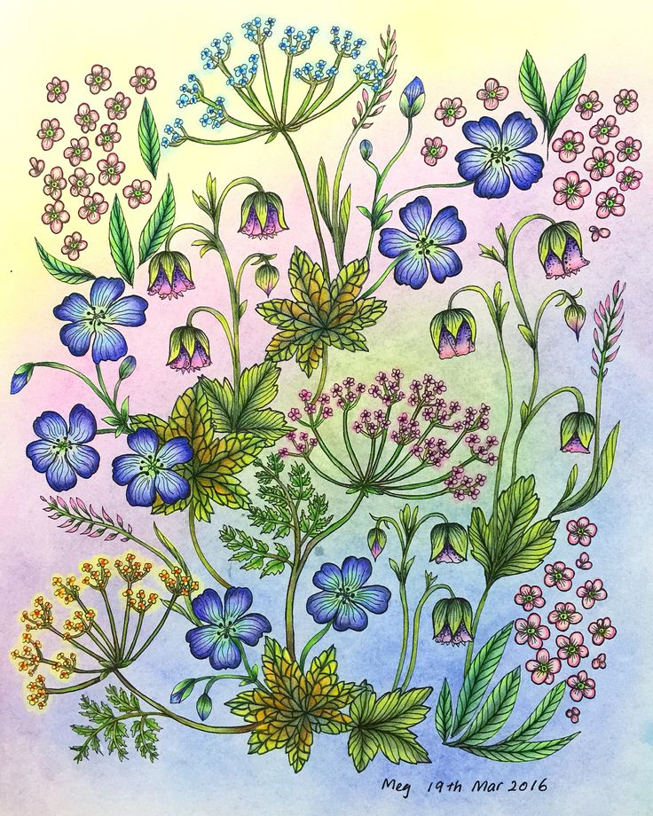 120 Best Bloomstermandala Images On Pinterest