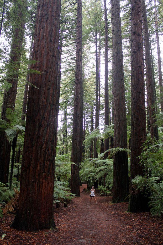 Sleeveless Top - Autumn Redwood by VIDA VIDA Buy Cheap Big Discount Sale Cheapest Price 4WoK2