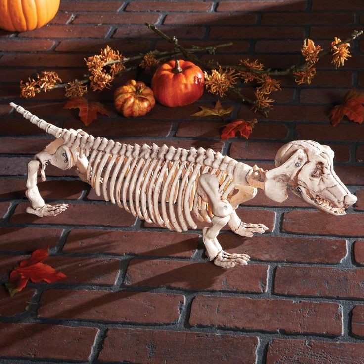 Halloween Posable Skeleton Spooky Scary Haunted House Prop Decoration…