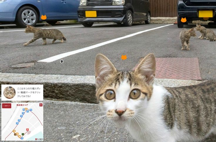 Get a Tour of Japan From a Cat's Perspective - http://www.psfk.com/2015/10/cat-tour-of-japan-cat-street-view-japanese-tourism-onomichi.html