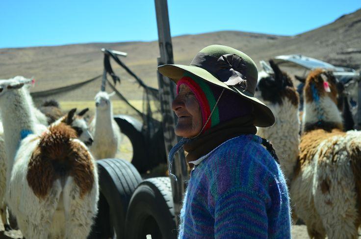 Nicasia Calisaya, ganadera aymara junto a sus animales en el corral. Paquisa, Putre. Chile.
