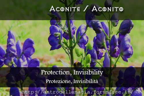 Magical Uses of Aconite: Protection, Invisibility || Usi Magici dell'Aconito: Protezione, Invisibilità | L'antro della magia http://antrodellamagia.forumfree.it/?t=56749306