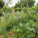 Plagas en el huerto jardín: la respuesta de un ecosistema desequilibrado