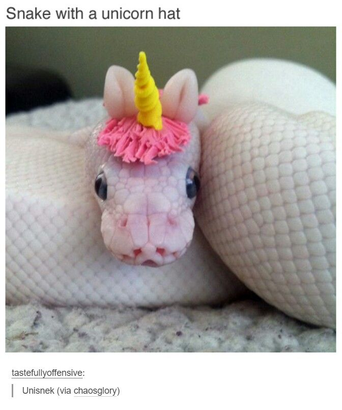 #Hobby #Hobbies #Snakes