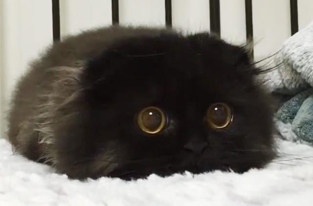 The cutest cat ever! Le plus mignon petit chat !