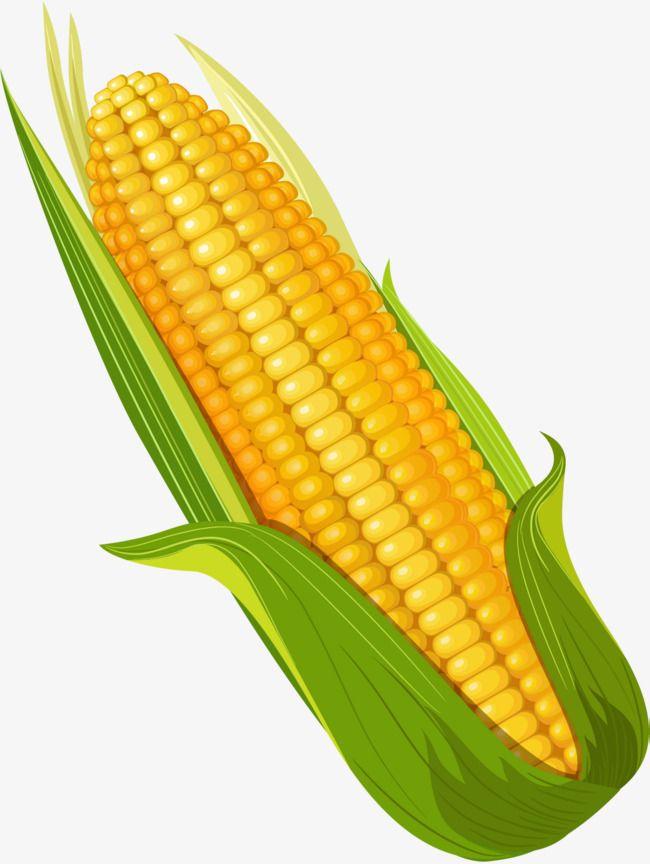 Hand Painted Yellow Corn Yellow Corn Vegetables Photography Corn
