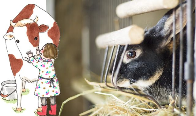 Faites-nous confiance, ce week-end sera doux comme un agneau. Vous serez même copains comme cochon avec vos enfants. Bienvenue à la ferme de Gally.