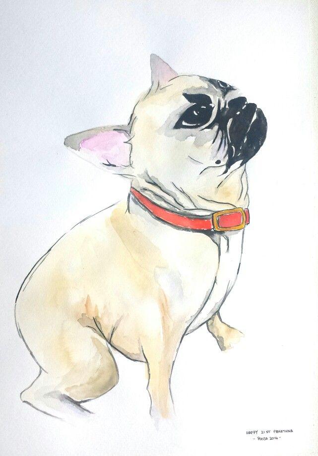 Pug, watercolor