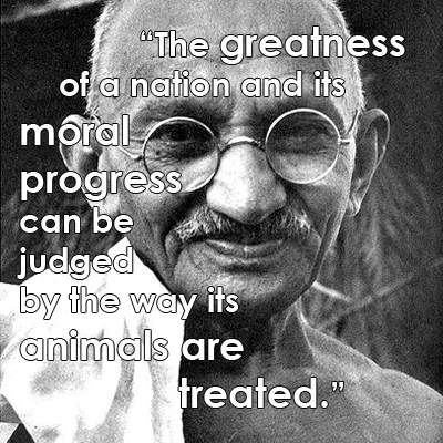 """""""The greatness of a nation and its moral progress can be judged by the way its animals are treated."""" -Mahatma Gandhi #Life  #Inspirational  #Motivational #Love #Happiness #ThinkPositive #Quotesforalltime #Quotesforlife  Catch more of Inspirational and Motivational Quotes Please don't forget to TO LIKE FOLLOW SHARE us on twitter @liveGreatQuotes..LiveGreatQuotes.com  TWITTER.com/livegreatquotes  FACEBOOK.com/livegreatquotes livegreatquotes.TUMBLR.com/"""