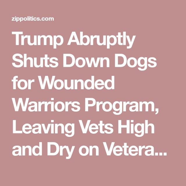 Trump Abruptly Shuts Down Dogs for Wounded Warriors Program, Leaving Vets High and Dry on Veteran's Day! – Realtime Politics