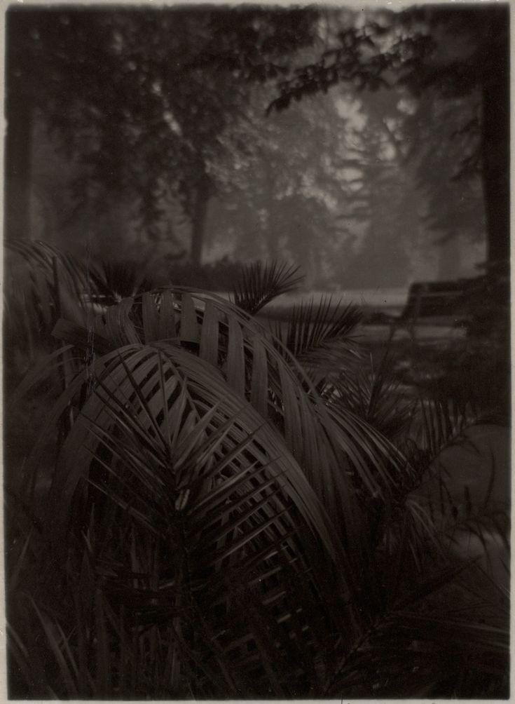 Il giardino regale, 1940–1946. - (Josef Sudek)