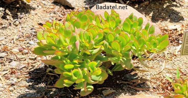 Táto rastlina v dome priťahuje peniaze ako magnet