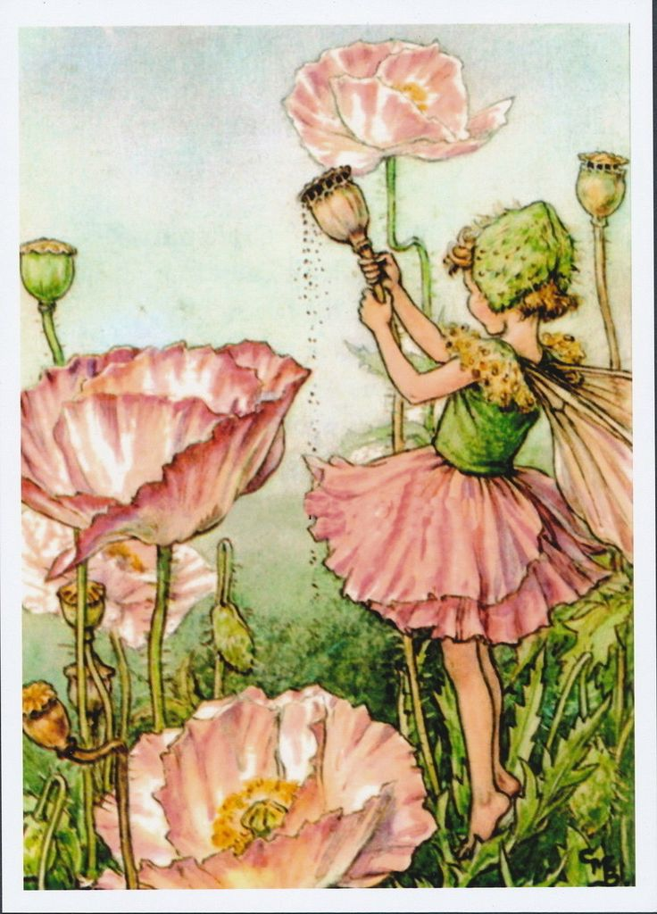 Victorian Fantasy Flower Fairy Shirley Poppy Girl Pink Poppies Seed Floral