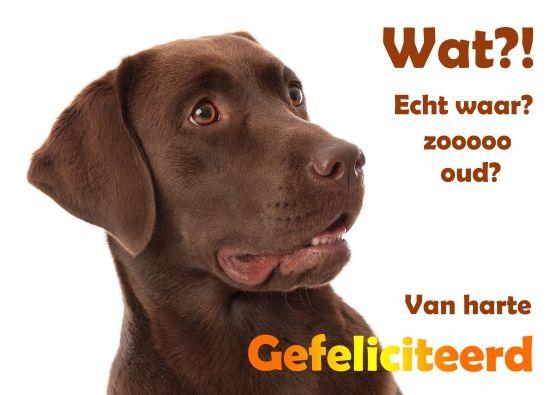 Grappige wenskaart voor een verjaardag van een bruine Labrador hond