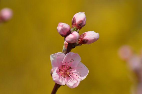 Növényvédelem április közepén 1-2 rész - gazigazito.hu