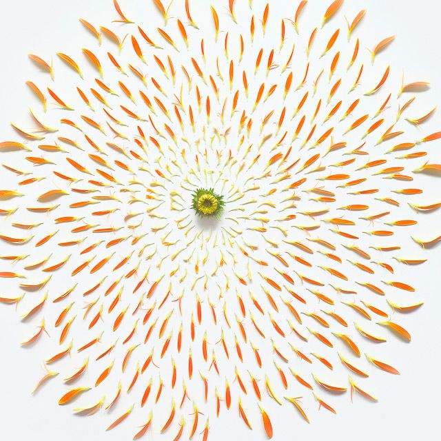 Hydrangea  Pom Pom Rose Sunflower Gerbera Lotus Lily Gerbera Gerbera, detail Chrysanthemum Exploded Flowers is a series of photos by artist Fong Qi Wei that shows a variety of flowers dissected into individual components. Reminiscent of exploding fireworks, it's fascinating to see