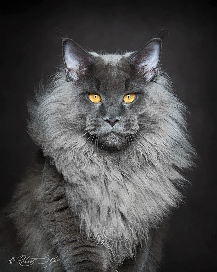 Самые красивые и популярные кошки в мире, чьи фотографии облетели весь интернет