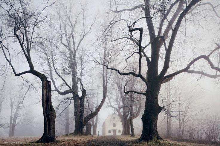 Dark Trees by Kilian Schönberger / 500px