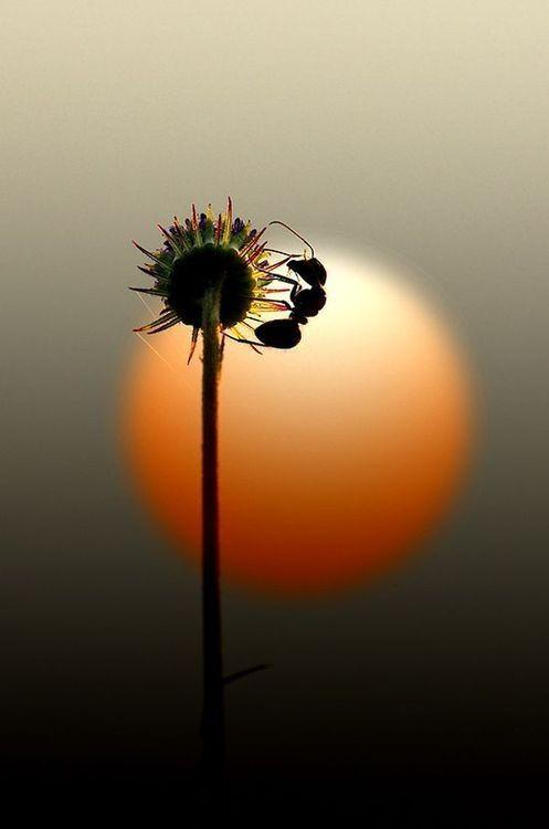 Amazing Shot ..  #ant sunset flower sun beautiful
