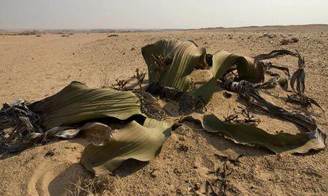 Una de cada 5 plantas –la base de toda la vida en la Tierra- está en peligro de extinción, según el estudio más amplio que se ha realizado hasta la fecha. Aunque existía un estudio previo,