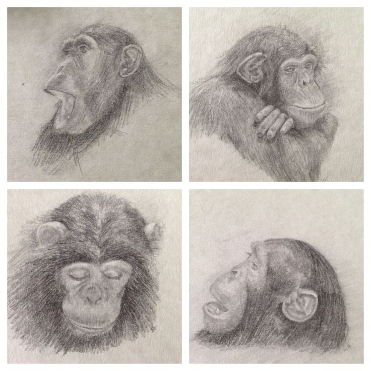 31 best images about Apes on Pinterest | Watercolor print ...