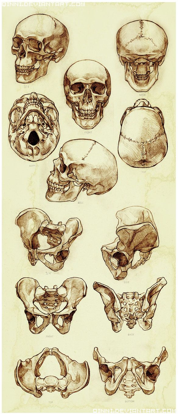 Skull and Pelvis Study by Qinni ✤ || CHARACTER DESIGN REFERENCES | 解剖 •  علم التشريح • анатомия • 解剖学 • anatómia • एनाटॉमी • ανατομία • 해부 • Find more at https://www.facebook.com/CharacterDesignReferences & http://www.pinterest.com/characterdesigh if you're looking for: #anatomy #anatomie #anatomia #anatomía #anatomya #anatomija #anatoomia #anatomi #anatomija || ✤