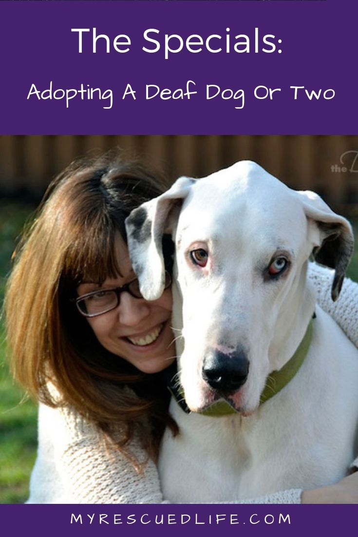 Have You Considered Adopting A Deaf Dog Learn More About Rescuing