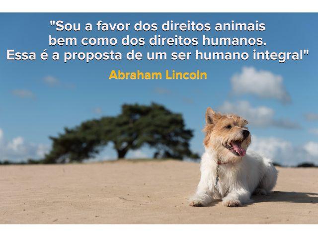 Você que é a favor dos direitos dos animais, compartilhe!  www.petmeupet.com.br
