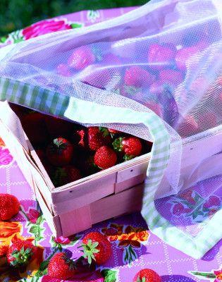 Owoce, napoje czy słodycze: ta dekoracyjna siatka przeciw owadom ochroni Twoje smakołyki przed insektami!