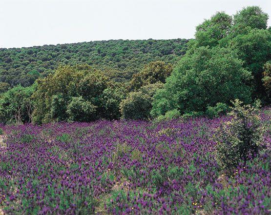 Matorrales, arbustos y encinas propios del medio mediterráneo.