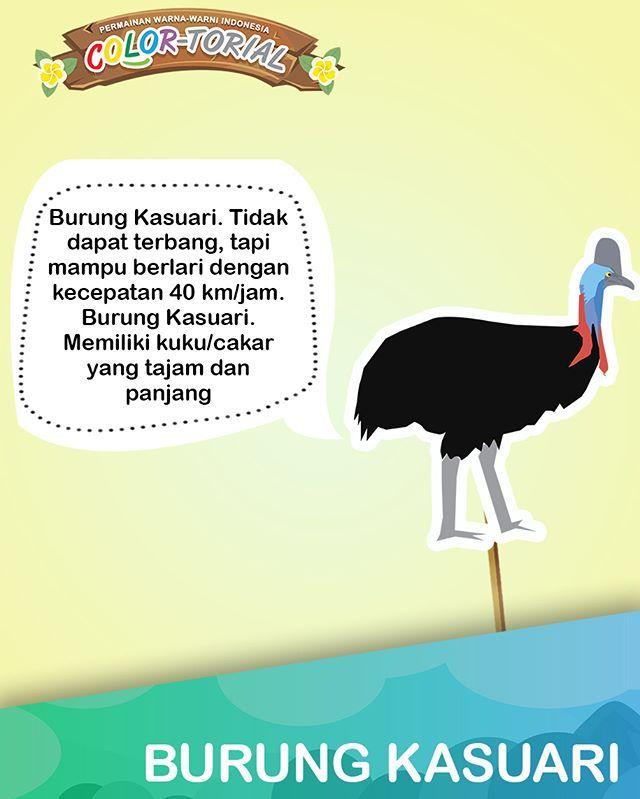 Meskipun tidak bisa terbang tapi burung ini cukup berbahaya lho! Ingin fakta unik yang lain? Download COLORtorial di Google Store: http://bit.ly/COLORtorialSeries | App Store: http://bit.ly/COLORtorial. Ada 8 seri lain  #EMCOLUX #COLORtorial #catkayubesi #warna #ngecat #surabaya #jakarta #depok #tangerang #bogor #bekasi #bandung #bali #banyuwangi #denpasar #jember #jogja #semarang #solo #kediri #mataram #nusatenggara #lombok #purwokerto #padang #makassar #cirebon #kupang #malang…
