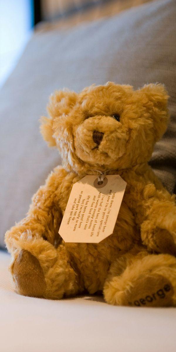 Our resident heart throb, George Bear.