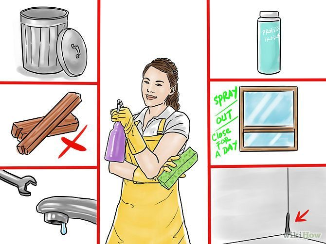 how to get rid of little roaches in your house