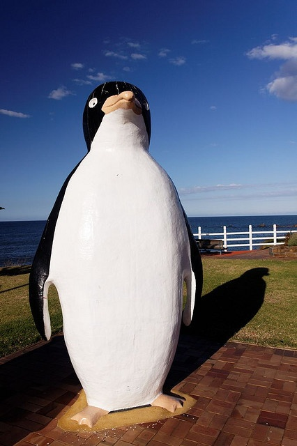 Big Penguin, Tasmania