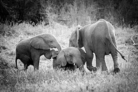Beautiful elephant sighting at Rhino River Lodge - Big 5 Safari Lodge in KZN, Hluhluwe
