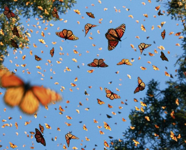 Photo by Tim Flach. #butterfly #butterflies #insects #bluesky #summer #swarm #animals #composition…""