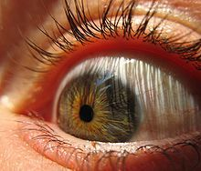Eyeball (sugarpond) - Pupila - Wikipedia, la enciclopedia libre