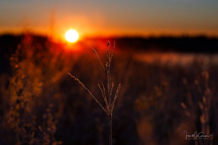 https://flic.kr/p/M7ccMy | Illuminated | First light through the prairie grass lights up nature's fine detail.  Website: www.ianmcgregorphotography.com Facebook: www.facebook.com/IanMcGregorPhotography  500px: 500px.com/photo/176914077/illuminated-by-ian-mcgregor  Thanks for the kind comments!