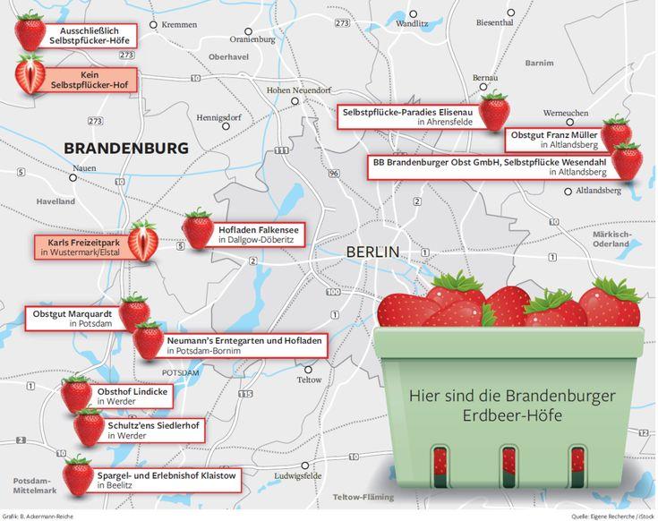 Seit dieser Woche ist im Berliner Umland die Erdbeersaison eröffnet - ab nächste Woche auch für Selbstpflücker.