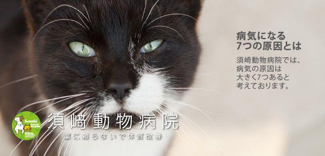 須崎動物病院 薬に頼らないで体質改善 原因療法 手作り食 サプリメント 電話相談 診療 動物 病院 獣医学